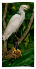 Hand Towel featuring the photograph White Egret by Christopher Holmes