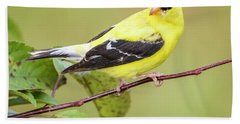 American Goldfinch Hand Towel by Ricky L Jones