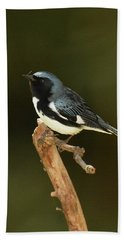 Black-throated Blue Warbler Bath Towel by Alan Lenk