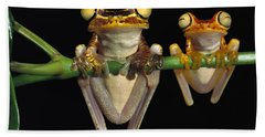 Chachi Tree Frog Hyla Picturata Pair Hand Towel