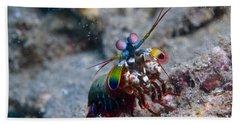 Close-up View Of A Mantis Shrimp, Papua Hand Towel