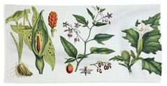 Common Poisonous Plants. Left To Right Hand Towel
