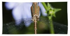 Bath Towel featuring the photograph Dragonfly by Nikki McInnes