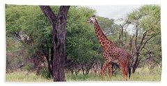 Giraffes Eating Acacia Trees Bath Towel