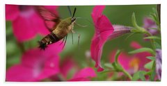 Hand Towel featuring the photograph Hummer Moth by Heidi Poulin