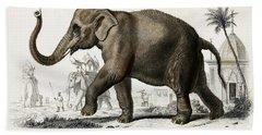 Indian Elephant, Endangered Species Hand Towel by Biodiversity Heritage Library