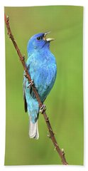 Indigo Bunting Bath Towel by Alan Lenk