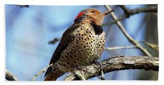 Bath Towel featuring the photograph Northern Flicker Woodpecker by Robert L Jackson