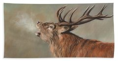 Red Deer Stag Hand Towel by David Stribbling