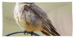 Say's Phoebe Hand Towel