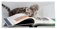 Scottish Fold Cats Hand Towel by Evgeniy Lankin