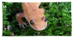 Spring Salamander Hand Towel by Ted Kinsman