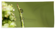 Water Drops On The Grass Hand Towel