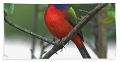 Painted Bunting Bath Towel
