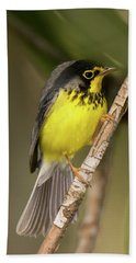 Canada Warbler Bath Towel by Alan Lenk