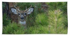 White Tailed Deer Calverton New York Hand Towel