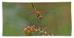 Band-winged Meadowhawk Hand Towel