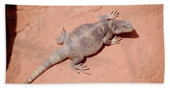 Chuckwalla, Sauromalus Ater Hand Towel