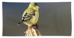 Lesser Goldfinch Bath Towel