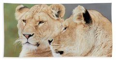 Bath Towel featuring the photograph Two Lions Close Together by Nick Biemans