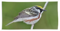 Chestnut-sided Warbler Bath Towel by Alan Lenk