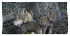 Gray Wolf And Cubs Hand Towel