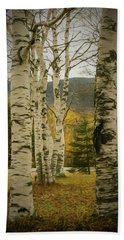 A Autumn Photo Of A Small Stand Of White Birch Trees. Bath Towel