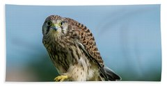 A Beautiful Young Kestrel Looking Behind You Hand Towel