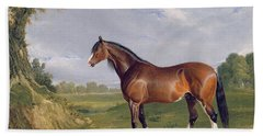 A Clydesdale Stallion Bath Towel