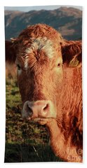 A Curious Red Cow Hand Towel