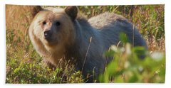A  Female Grizzly Bear Looking Alertly At The Camera. Hand Towel