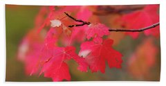 A Flash Of Autumn Hand Towel