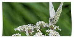 A Green-veined White (pieris Napi) Bath Towel by John Edwards