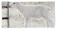 A Little Lamb Hand Towel