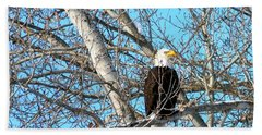 Hand Towel featuring the photograph A Majestic Bald Eagle by Will Borden