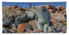 A Mountain Goat Pose Hand Towel