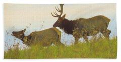 A Portrait Of A Large Bull Elk Following A Cow,rutting Season. Bath Towel