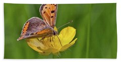 A Small Copper Butterfly (lycaena Bath Towel
