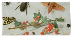 A Sprig Of Redcurrants With An Elephant Hawk Moth, A Magpie Moth And Other Insects, 1657 Hand Towel