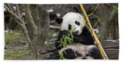 A Young Giant Panda Sitting And Eating Bamboo Bath Towel