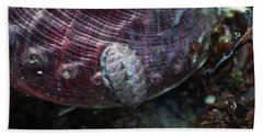 Bath Towel featuring the photograph Abalone And Chiton by Adria Trail