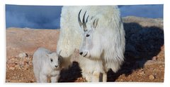 Above The Clouds. Mother And Kid - A Young Rocky Mountain Goat Stands Inquisitively Next To Its Mom Hand Towel