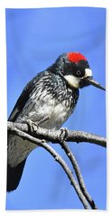 Acorn Woodpecker Close Hand Towel