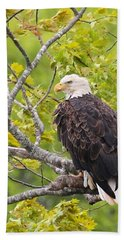 Adult Bald Eagle Hand Towel