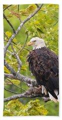 Adult Bald Eagle Bath Towel by Debbie Stahre