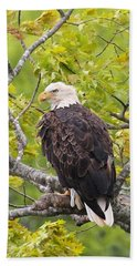 Adult Bald Eagle Bath Towel