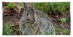 Adult Rabbit Grazing Hand Towel