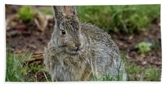 Adult Rabbit Grazing Bath Towel