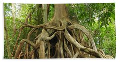 Aerial Roots Of Fig Hand Towel