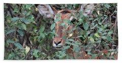 Africa - Animals In The Wild 4 Hand Towel